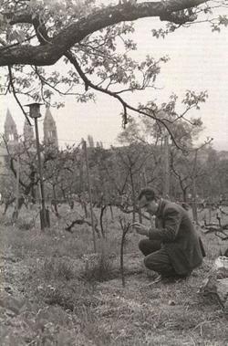 1961. A Damjanich utcai kertben.
