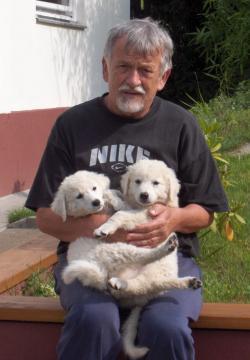 Oravecz Imre két kuvaszkölyökkel (fotó: Kocsis L. Mihály)