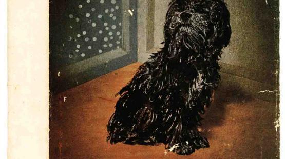 Az állatok királya - a kutya.